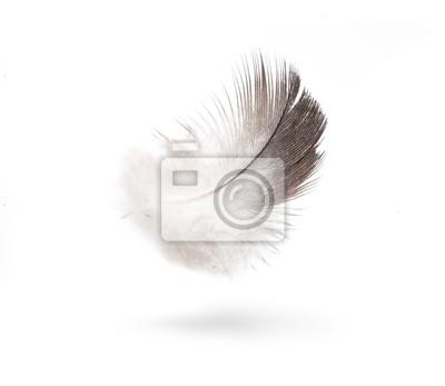 sztuki dove białe pióra na białym tle