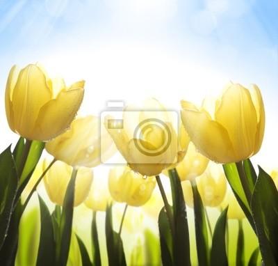 sztuki dzikie kwiaty pokryte rosą w słońcu