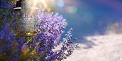 Naklejka sztuki latem lub wiosną piękny ogród z kwiatów lawendy