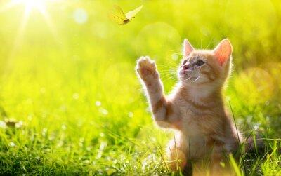 Naklejka sztuki Młody kot / kotek polowanie biedronka z podświetlany