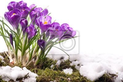 Sztuki piękne wiosenne kwiaty