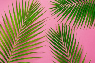 Naklejka Table top view aerial image of summer season holiday background concept.Flat lay coconut or palm green leaf on modern rustic pink paper backdrop.Free space for creative design mock up text for content