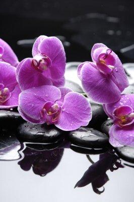 Naklejka terapii kamienie z różowa orchidea refleksji
