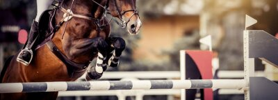 Naklejka The shod hooves of a horse over an obstacle. The horse overcomes an obstacle. Equestrian sport, jumping. Overcome obstacles.