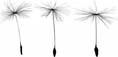 Naklejka three black dandelion seeds silhouette isolated on white