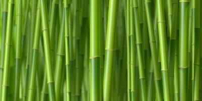 Tiges de bambous 1