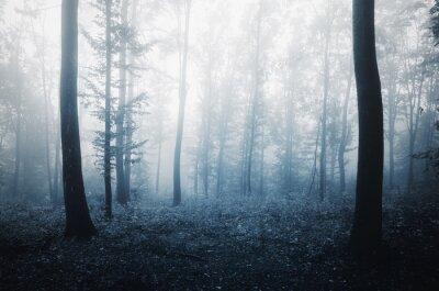 tła lasu w wieczornym świetle