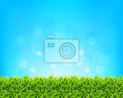 tle nieba i trawy