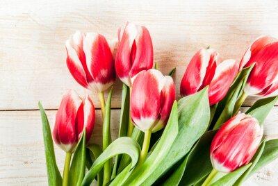 Naklejka Tło dla gratulacje, karty z pozdrowieniami. Świezi wiosna tulipany kwitną, na białej drewnianej tło odgórnego widoku kopii przestrzeni
