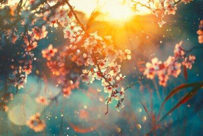 Tło wiosna blossom. Natury scena z kwitnącym drzewa i słońca racą. Wiosenne kwiaty. Piękny sad