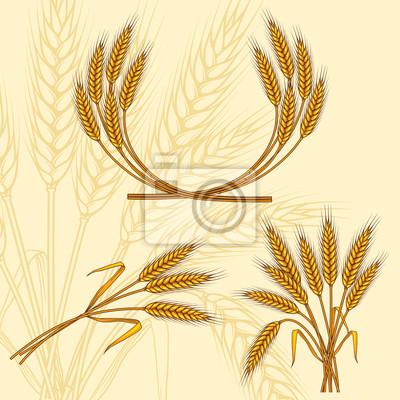 Tło z dojrzałych żółte kłosy pszenicy, ilustracji wektorowych.