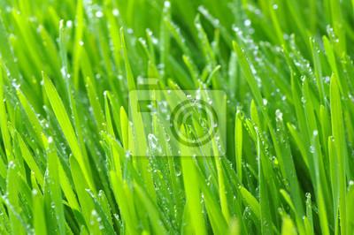 tło zielony trawnik