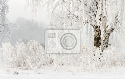 Tło zima natura. Szron na gałęziach drzew. Zimna śnieżna pogoda. Mroźna zima. Śnieżne rośliny. Tło Boże Narodzenie i nowy rok. Niesamowita zima