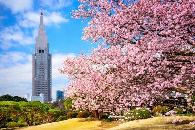 Naklejka Tokio, Japonia w Shinjuku Gyoen Park na wiosnę