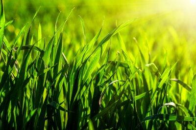 Naklejka trawa i słońce światło