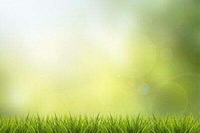 Naklejka Trawa i zielony charakter niewyraźne tło