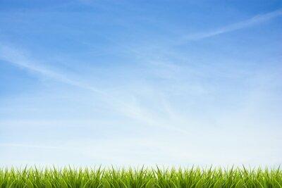 Naklejka Trawa trawa pod błękitne niebo i chmury