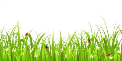 Naklejka Trawa z biedronka na białym tle