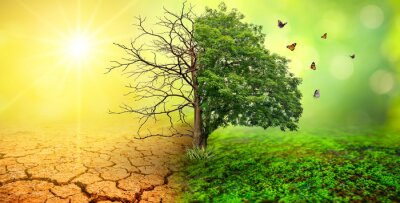 Naklejka tree in two  with very different environments Earth Day or World Environment Day Global Warming and Pollution