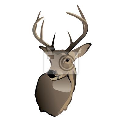 Trophy Whitetail Buck