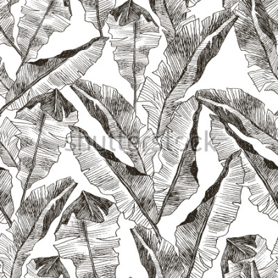 Naklejka Tropic plants floral seamless jungle pattern. Print vector background of fashion summer wallpaper palm banana leaves in black and white gray style