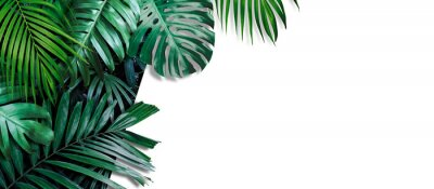 Naklejka Tropical leaves banner on white background with copy space