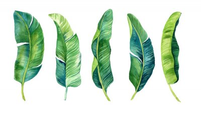 Naklejka Tropical leaves, palm leaves drawn by hand. Set of watercolor illustrations. For fabric, cards, invitations, weddings and other