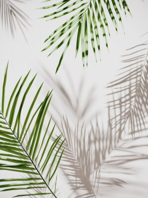 Naklejka Tropical palm green leaves on  light pastel background. Unobtrusive botanical background with shadow on the wall - trend frame, cover, card, postcard, graphic design - 3D, render, illustration.