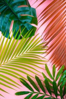 Naklejka tropical palm leaf pink sweet background