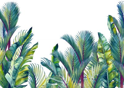 Naklejka Tropical palm trees and banana leaves. Isolated watercolor background.