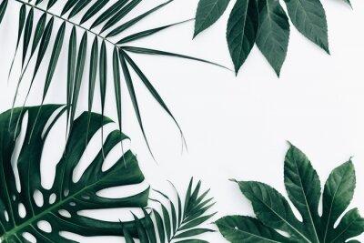 Naklejka Tropikalne modne tło. Liście na białym tle