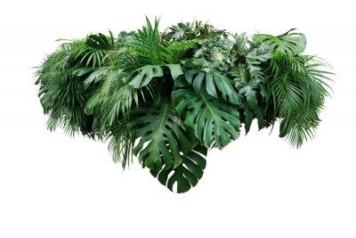 Naklejka Tropikalnego liścia ulistnienia rośliny dżungli krzaka przygotowania natury kwiecisty tło odizolowywający na białym tle, ścinek ścieżka zawierać.