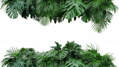 Naklejka Tropikalnego liścia ulistnienia rośliny krzaka przygotowania kwiecistej natury tło odizolowywający na białym tle, ścinek ścieżka zawierać.
