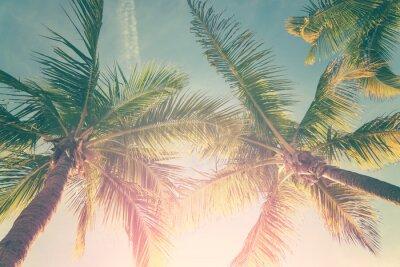Naklejka Tropikalny krajobraz z palmami i sunny sky