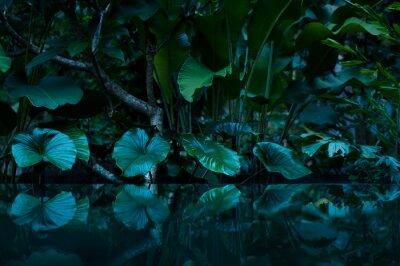 Naklejka Tropikalny las deszczowy z lustrem wody