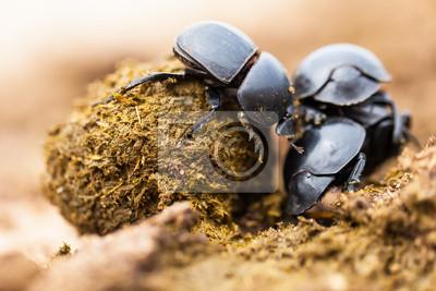 Naklejka Trzy chrząszcze szkolenia pracuje naprawdę ciężko razem.