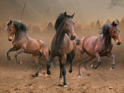 Naklejka trzy konie