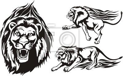 Trzy lwy na polowania. Flaming wielkich kotów.