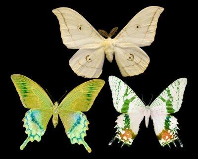 Naklejka Trzy motyle odizolowane na czarno