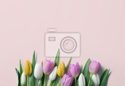 Tulipan koncepcji tła