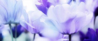 Naklejka tulipany cyjan fiołek ultralekki