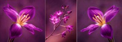 Naklejka Tulipany i Orchidea