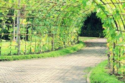 Naklejka Tunel Drzewo kątowy Luffa zakładu