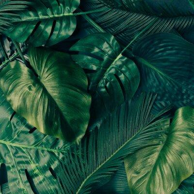 Naklejka Układ kreatywny tropikalnych zielonych liści. Koncepcja wiosna przyrody. Płaskie leżało.