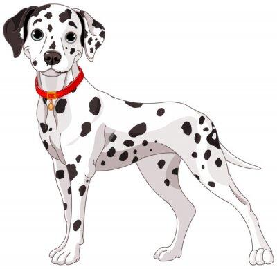 Naklejka Uroczy pies Dalmacji