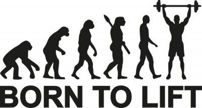 Naklejka Urodził się podnieść ewolucję sztangista