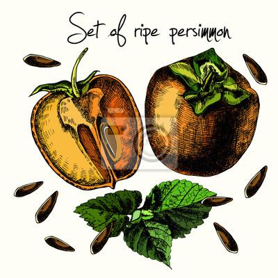 Ustaw dojrzałych persimmon.