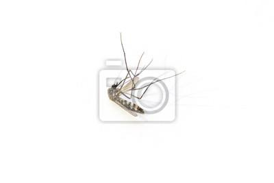 uważaj na komary, nosicielem dengi, dramatyczny cień na białym tle