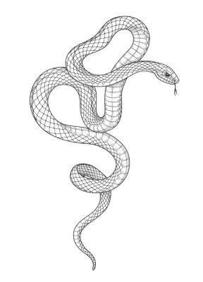 Naklejka Vector Hand Drawn Monochrome Snake