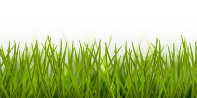 Naklejka Vector realistic seamless green grass border or frame isolated on white background - nature, ecology, environment, gardening template